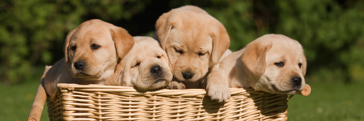 Canine Puppy Dog Care Knoxville